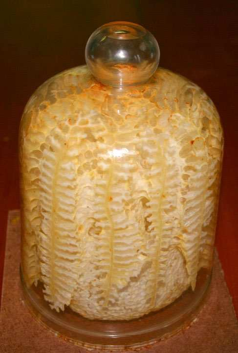 a beehive into a glass jar