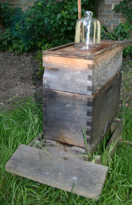 starting a hive with a glass jar